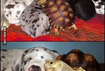 Animals....too cute