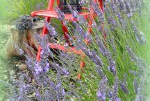 garden / zahrada,kvetiny
