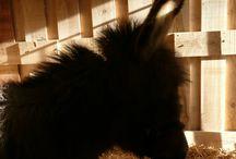 my donkeys