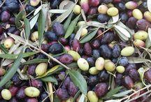 oliverine olive oil