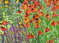 Vackra växtkombinationer