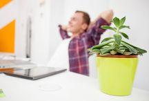 money attracting plants