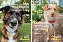 Adopt/Spay/Neuter / by Kelley Walter