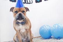 benji's birthday!