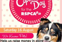 Cupcake day for the RSPCA! / A fundraiser to help the fight against animal cruelty.