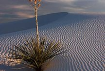 Desert Scenes / Scenes for Nicole's & Pace's painting / by Kim Clinger