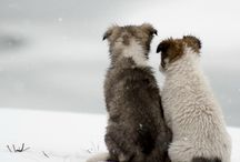 Animals/best pals