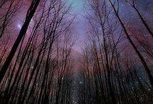 Forest / by Cassandra Mosmeyer