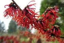 feuille rouge automne