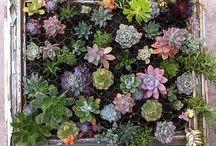 Natur, Garten, Pflanzen