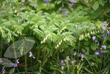 Plants identified in our garden