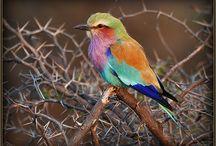 Animals - Birds / by MJ Butler