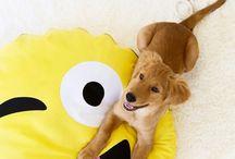 emoji dog bed