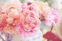 Bloom it