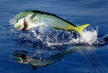 Fishing / by Krista Krone