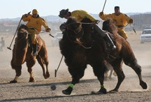 "Camel Festival Mongolia / Camel Festival Mongolia is held in February every year in Gobi. The festival consists of ""Camel Polo"" ""Camel Race"" and ""Competition of best dressed couple""