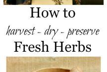 Harvest / Preserving Herbs