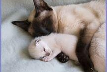 Katuak&Mamys