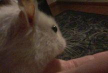 Hamsterit / -