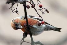 Fåglar (egna bilder)