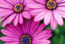 Flowers & Plants' / by Kim Jenks