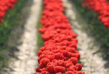 Red, redder, reddest