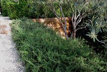 Rośliny ogrodowe uprawa