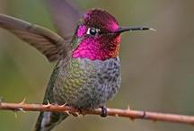 Bird, Hummingbird 🐤 / by Erika Moore