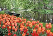 Dutch Flower Museum The Keukenhof / by Marieke Mulder-Torres