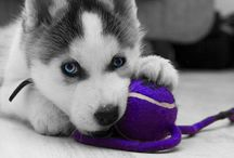 Amazing Animals / adorable animals and animals I love :) / by Amber Casperson