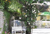 Poolside Gardening / by Burpee Gardens
