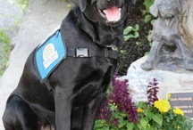 * Guide Dogs Worldwide / Guide Dogs   Seeing-Eye Dogs   Pilot Dogs [https://sites.google.com/site/pilotdogs/]   http://en.wikipedia.org/wiki/Guide_dog   Assistance Dogs [http://www.assistancedogsinternational.org/assistancedogproviders.php]   International Guide Dog Federation [http://www.igdf.org.uk/closest-dog-guide-providers/] http://en.wikipedia.org/wiki/List_of_guide_dog_schools