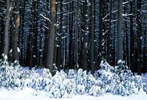 Winter in the Poconos  / The Pocono Mountains offers beauty for all seasons! Check out the beauty of the Poconos in winter!