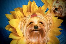 Flower Dog...think Flower Child w/o the child / Created Images of Dogs as flowers, with flowers and