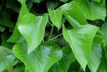 PLANTAS ORNAMENTALES / outdoor, indoor plants