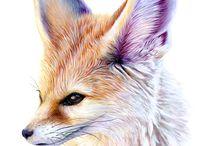 Fox - Róka