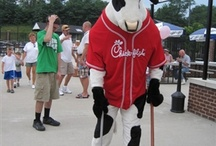 Chick-fil-A Cow Fun / Our Chick-fil-A Cows know how to have fun!