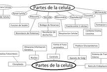 Biología 2Bach-C