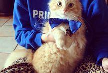 Bow Tie Cuteness