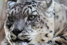 Endangered Species / Endangered means we still have time, Extinction is forever.
