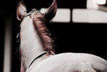 AU | Equestrian / au ; [ RIDING, EVENTING, HORSE LIFE ]
