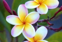 for flower