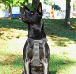 Solid K9 Training - Dog Training / At Solid K9 Training, we understand the importance of developing a unique real world dog training program that brings out each dog's full potential so they can exist in harmony with their owners each and every day. We will train any dog, regardless of breed, shape, size or history.