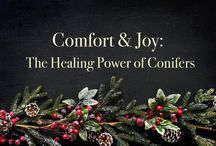Conifer Medicine and Personal products