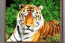29. Juli 2017 Internationaler Tag des Tigers