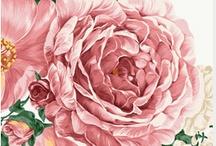 Vintag Roses