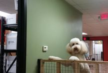 Million Dollar Dog Instagram Pictures / Fun photo's of the pets in our care!