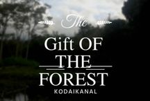"""The Gift of the Forest : Kodaikanal / The unique blend of hills covered with Shola plantation & the fragrance of Eucalyptus all around is one of the untold reasons that it's called as """"The Gift of the Forest"""". Be it the presence of chilled out climate throughout the year (provided you are staying somewhere close to the lake), delicious chocolates or the Magical fruit, Kodai has it all..!!"""