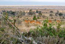 Cudowna Kenia