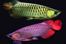 Fashionable freshwater organisms